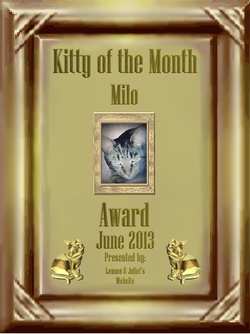 June 2013 Kitty of the Month - Milo