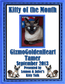Gizmo September's Kitty of the Month