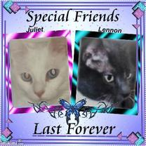 Special Friends Last Forever